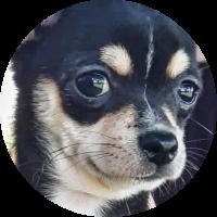 zafira-trip-for-dog
