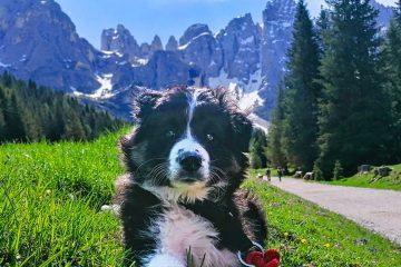 Dog-Camp-Dolomiti-Trentino-Alto-Adige-4-zampe