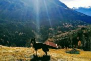Dog-Camp-Dolomites-Trentino-Alto-Adige-4-legged_5