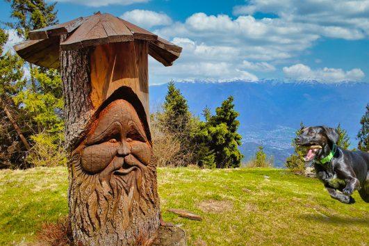 Dog-Trekking-Sentiero-del-Bosco-Incantato-in-Val-di-Scalve-bergamo-lombardia