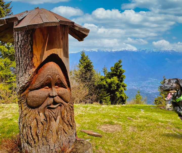 Dog-Trekking-Path-of-Enchanted-Wood-in-Val-di-Scalve-Bergamo-Lombardy