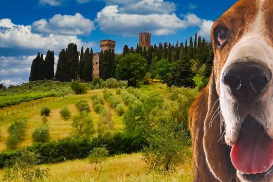 Hiking-in-Chianti-tour-di-branco-Toscana