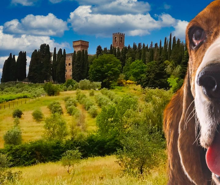 Hiking-in-Chianti-tour-di-branco-Toscana