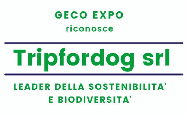 gecko-tripfordog-2021