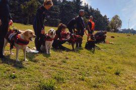 openday-sics-scuola-italiana-cani-salvataggio