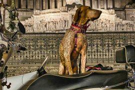 Bautour-di-Roma-in-vespa-e-sidecar-con-un-cane-classic