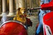 Roma-in-vespa-e-sidecar-cane