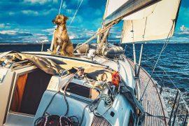 Barca a vela alle isole Eolie olie con un cane