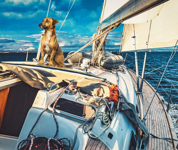 Sailboat to the Aeolian Islands with a dog
