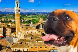 Cammino-da-San-Gimiano-a-Siena-con-un-cane
