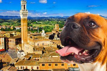 Cammino-da-San-Gimiano-a-Siena-con-un-cane