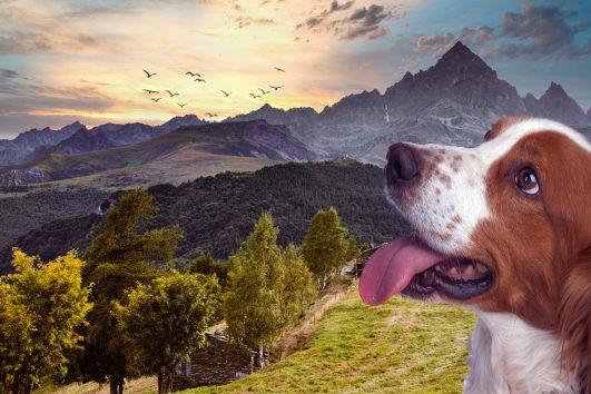 Cammino-in-val-maira-cuneo-con-un-cane-a-piedi