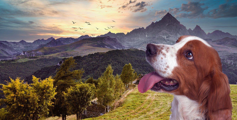 Walk-in-val-maira-cuneo-mit-einem-Hund-zu-Fuß