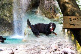 Dog-Explorer-alla-Cascata-di-Cenghen