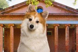 Dog-Trekking-con-pic-nic-al-Tempio-di-Minerva-a-Montefoscoli
