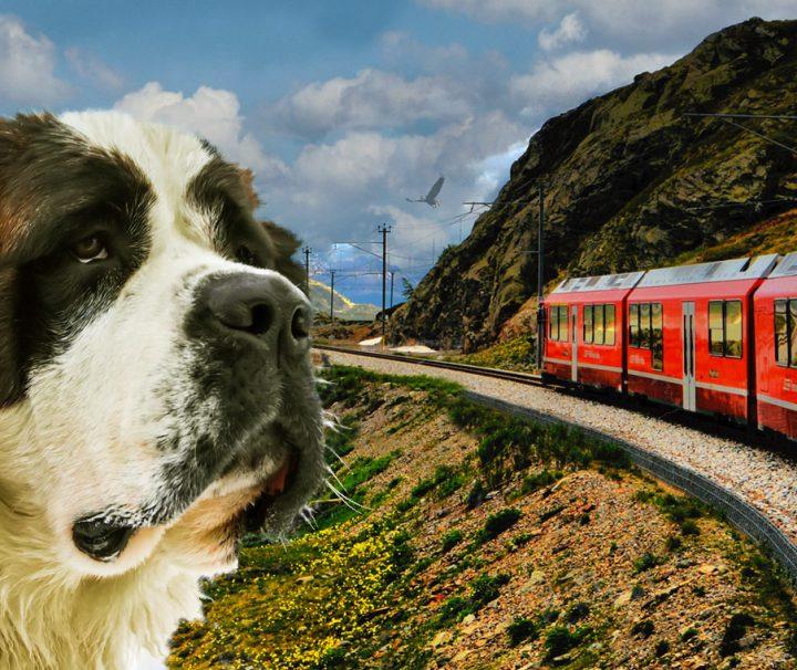 Trenino-rosso-del-bernina-con-un-cane