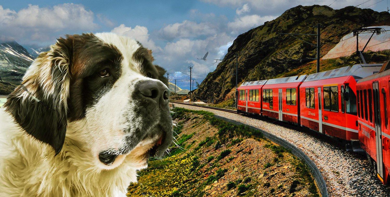 Bernina-roter-Zug-mit-einem-Hund
