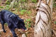 Bau-trekking-by-pack-to-the-path-Spirits-of-the-Wood
