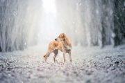 BauRicordi-Photo-shoot-of-your-dog