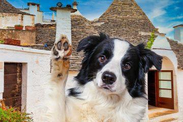 BauTour-in-Puglia-con-un-cane-una-settimana-tra-gusto-natura-e-cultura