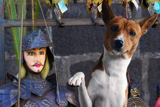 BauTour-in-Sicilia-con-un-cane-una-settimana-tra-gusto-storia-e-natura_v2