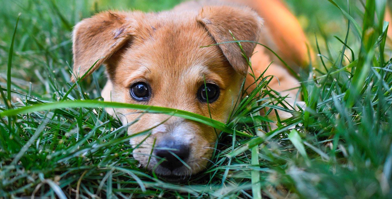 dog-trekking-cuccioli-valle-del-curone-lombardia