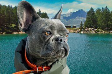 Dog-Trekking-di-branco-al-Lago-Azzurro