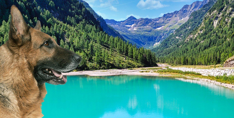 Dog Trekking di branco al Lago delle Fate (VB)