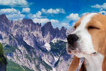 3-giorni-per-le-dolomiti-friulane-cammino-di-san-cristoforo-con-un-cane