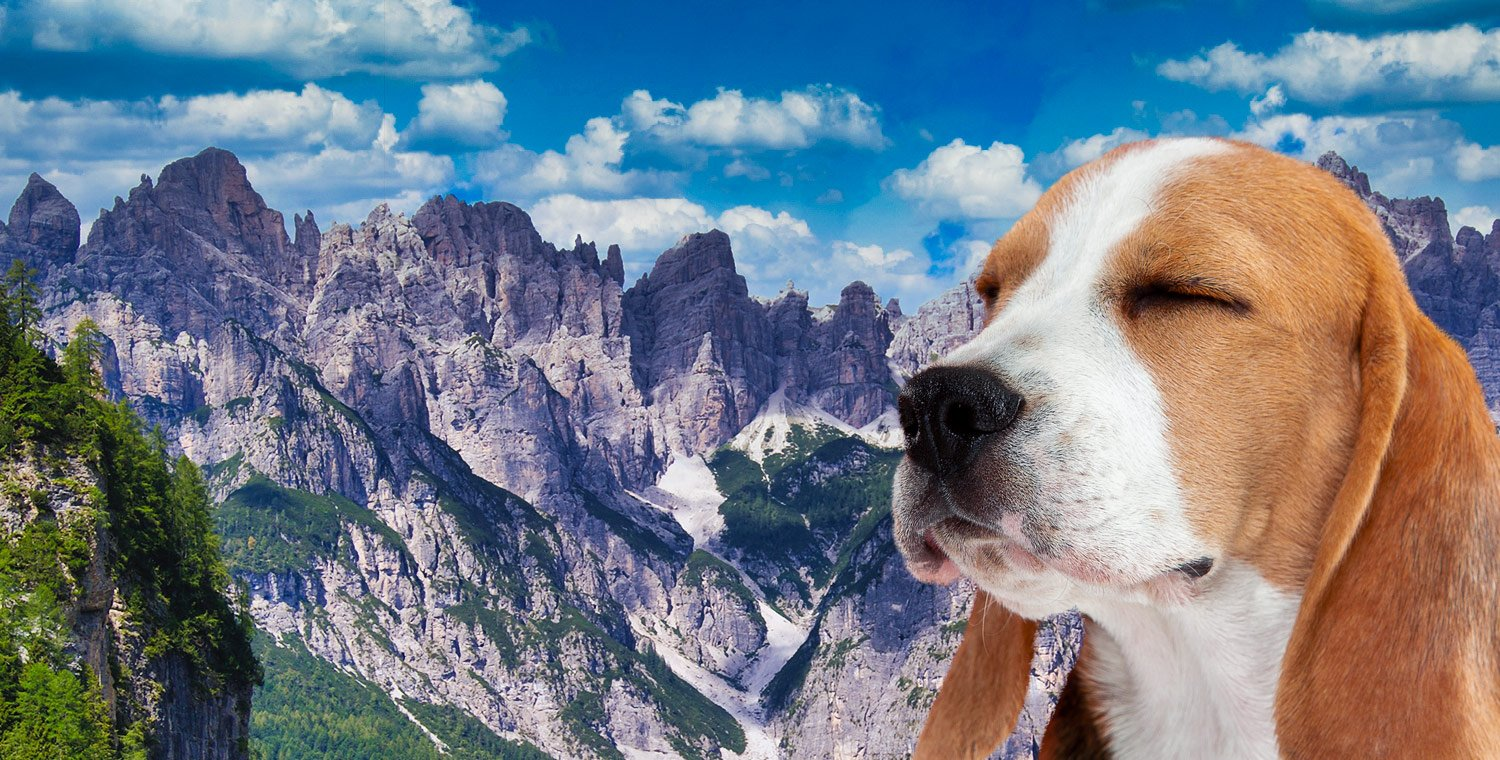 3-days-to-the-Friulian-dolomites-way-of-st-christopher-with-a-dog