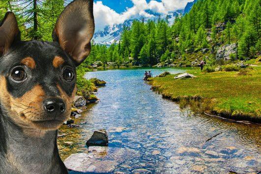 Hunde-Explorer-Herde-Alpe-Devero-Lago-delle-Streghe