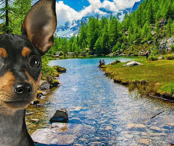 Dog-Explorer-branco-Alpe-Devero-Lago-delle-Streghe