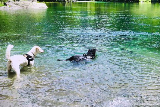 Hunde-Trekking-di-branco-in-Val-di-Mello-Valtellina_9_21