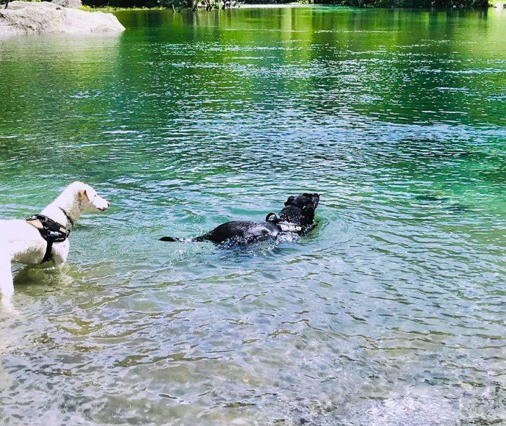 Dog-Trekking-di-branco-in-Val-di-Mello-Valtellina_9_21