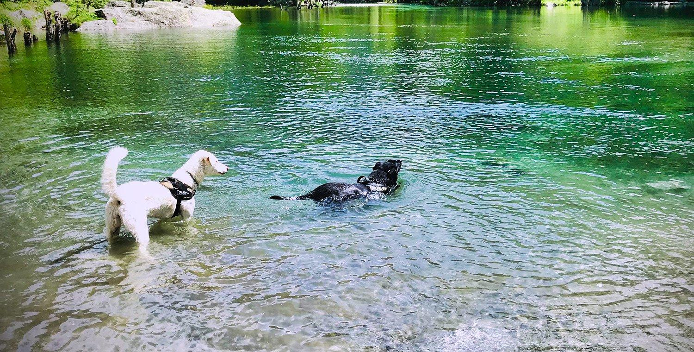 Dog-Trekking-of-branco-in-Val-di-Mello-Valtellina_9_21