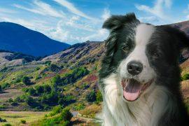 Dog-Trekking-di-branco-sul-Monte-Gottero_v2