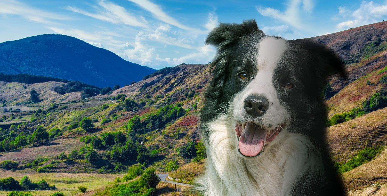 Hunde-Trekking-di-branco-sul-Monte-Gottero_v2