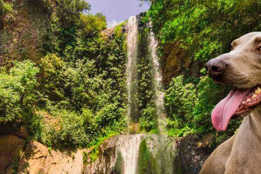 Dog-trekking-to-the-waterfalls-of-Cerveteri