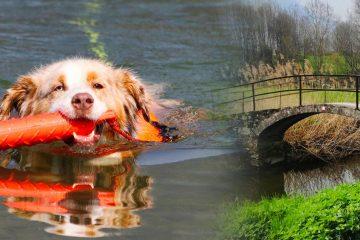 Hund-im-Wasser-und-vier-beinigen-spaziergang-entlang-dem-Sentiero-dei-Forti-di-Colico-LC