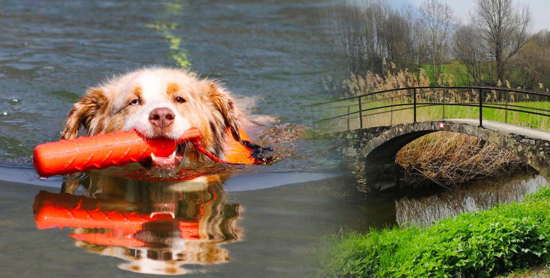 dog-in-water-and-4-legged-walk-along-the-Sentiero-dei-Forti-di-Colico-LC
