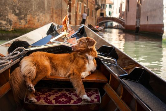 venice-in-gondola-with-a-dog
