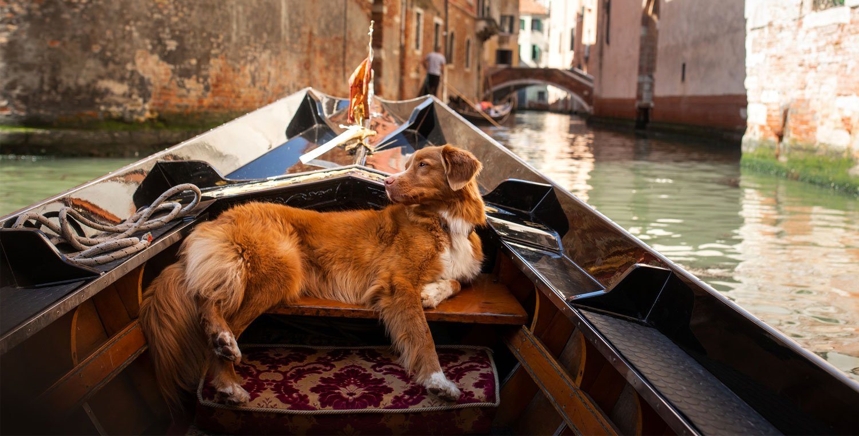 venedig-in-gondel-mit-einem-hund