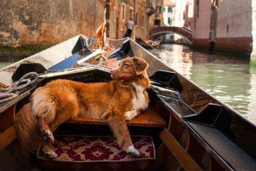 venezia-in-gondola-con-un-cane
