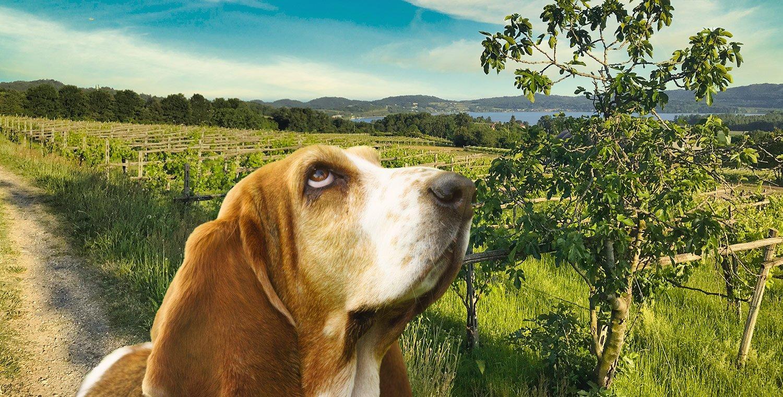 Tra-le-vigne-al-Tramonto-da-Piverone-a-Viverone_mattino