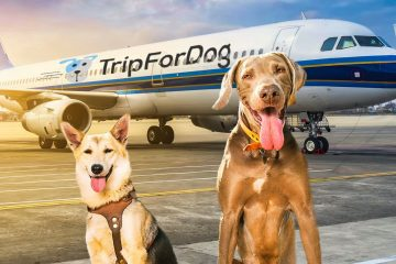 BauTour from Milan to Rome by plane with dogs of all sizes in the cabin with guided tour