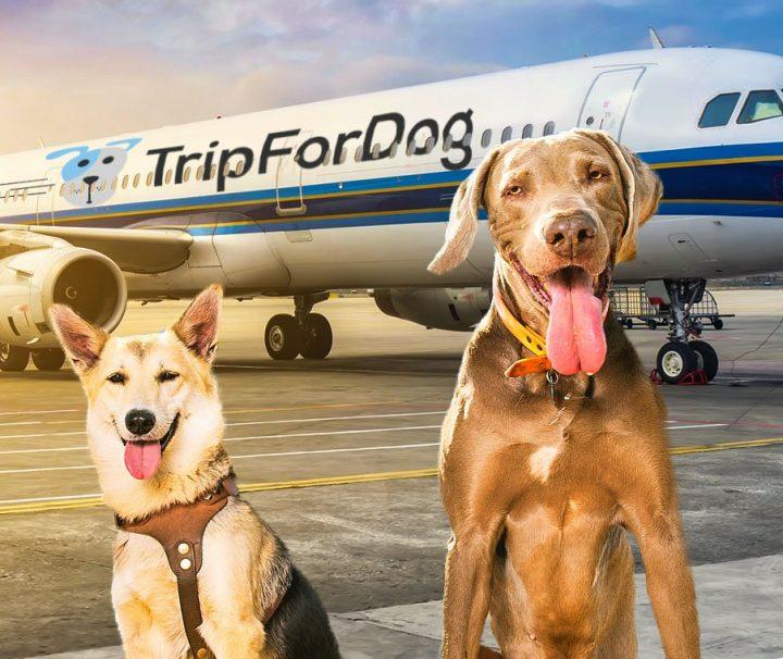 BauTour von Mailand nach Rom mit dem Flugzeug mit Hunden aller Größen in der Kabine mit Führung