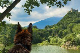 BauTour-of-herd-ring-of-Lake-Sirio-and-of-Terre-Ballerine