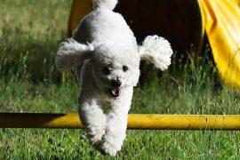 Agility-Hundeerfahrung-für-Anfänger-in-Pistoia