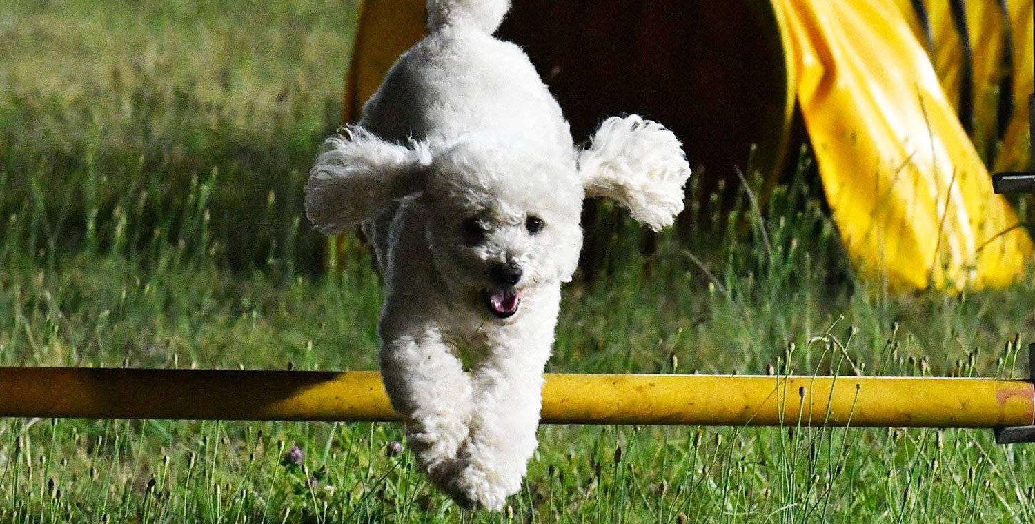 Agility-Dog-experience-for-beginners-in-Pistoia