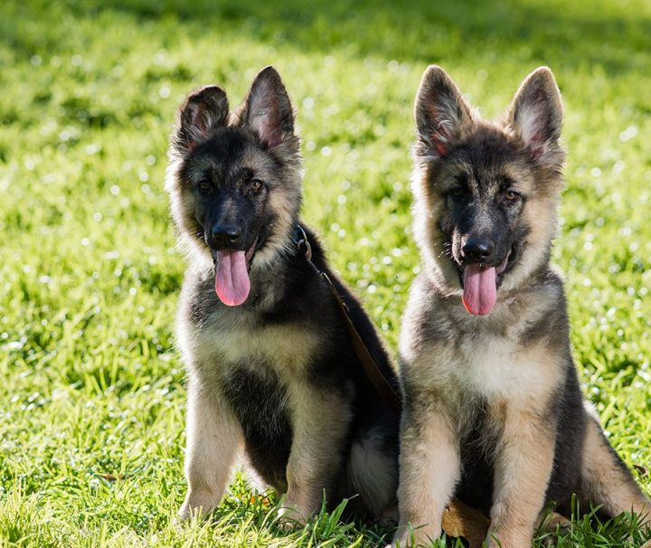Puppy-class-basic-course-building-healthy-lasting-relationship